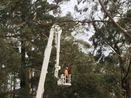 travel tower for tree trimming
